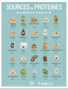 Sources protéines végétales et légumineuses